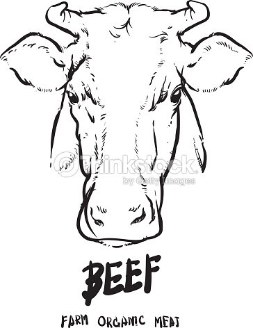 hand drawn cows head on white background drawing vector illustration