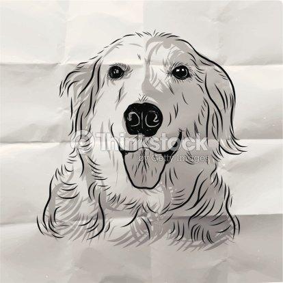Main tir chien golden retriever clipart vectoriel thinkstock - Dessin golden retriever ...