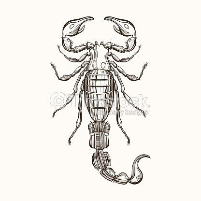 Dibujados A Mano Dibujo De Grabado Escorpión Ilustración Vectorial
