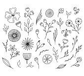 Hand drawn floral elements. Isolated doodle flowers. Vector illustration.