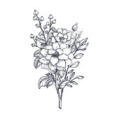 Hand drawn flower bouquet in sketch style. Vector plants