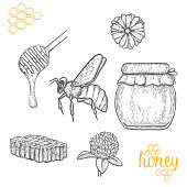 Honey making hand drawn vector illustration set. Honey jar, bee, honey stick, clower and honeycomb sketches isolated on white background.