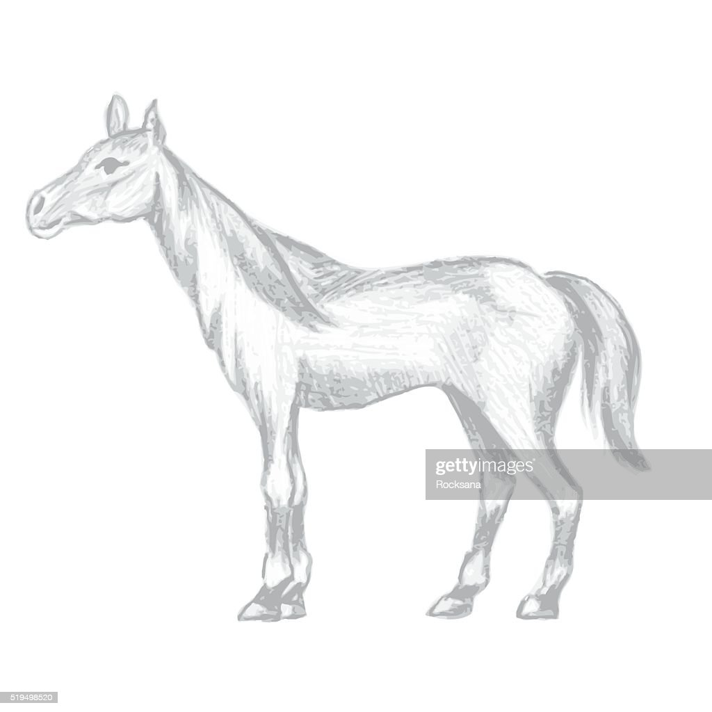 hand drawn horse pencil drawing of mare vector art thinkstock Billerica MA Re hand drawn horse pencil drawing of mare vector art