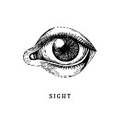 Hand drawn icon of human Sight sense in engraved style. Vector illustration of mans Eye.