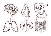 Hand drawn illustration of human organs. Medical pictures. Human anatomy and health drawing organ vector