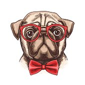 Vector hand drawn illustration of funny little pug in glasses and a bow tie