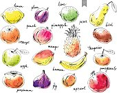 Hand drawn ink sketch and watercolor stain fruits. Apple, orange, fig, pineapple, pear, mango, lime, plum, apricot, peach, kiwi, banana, pomegranate, persimmon.