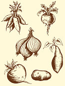 Set of vector vintage hand drawn roots