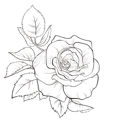Hand Drawn Rose Flower Isolated On A White Vector Art ...