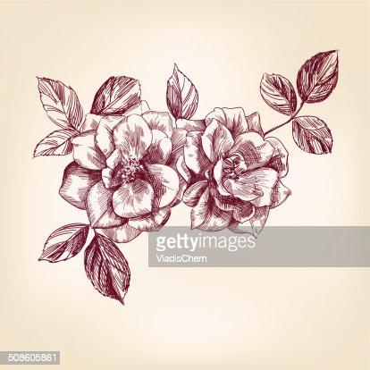 Mão desenhadas rosas : Arte vetorial