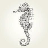 Vintage vector illustration of marine fish