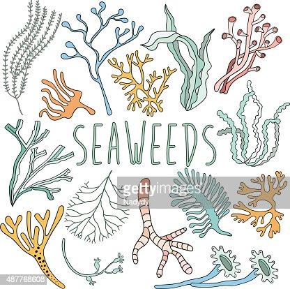 Disegno A Mano Set Di Alghe Collezione Di Subacquea Arte Vettoriale