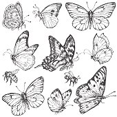 Hand drawn set of doodle insects. Monochrome image of flying and sitting butterflies and bees. Black and white elements for coloring. Vector sketch.
