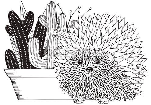 Mano Dibujada De Suculentas Y Cactus Y Erizo Espinoso Elementos De ...