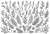 Hand drawn set of tree branches with leaves, flowers, field grass, decorative dividers, design elements
