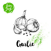 Hand drawn sketch garlic group with black pepper. Fresh farm food vector illustration. Farm vegetables poster. EPS10 + JPEG preview.