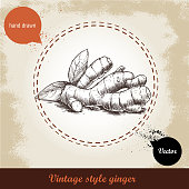 Ginger root illustration. Vintage retro background with hand drawn sketch ginger root. Herbs and spices vector illustration