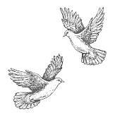 Hand drawn pair of flying doves isolated on white background. Black and white image. Two pigeons vector sketch.