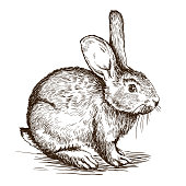 hand drawn sketch of  rabbit on a white background