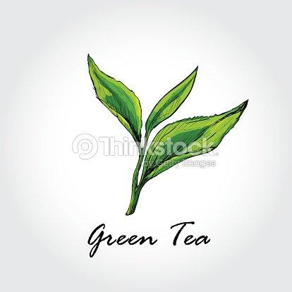 Hand Drawn Sketch Vector Green Tea Background Art