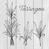 Hand drawn tarragon. Vector illustration of a sketch style