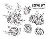 Hand drawn vector illustration. Collection of raspberry. Isolated on white background. Design elements in sketch style. Perfect for menu, cards, blogs, banners
