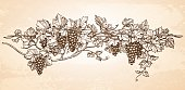 Hand drawn vector illustration of grapes. Vine sketch on old paper background. Vintage style.