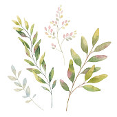Hand drawn vector watercolor set green branches. Floral background for design of natural food, kitchen, market, textiles, decorations. Beautiful rustic card on white backdrop.