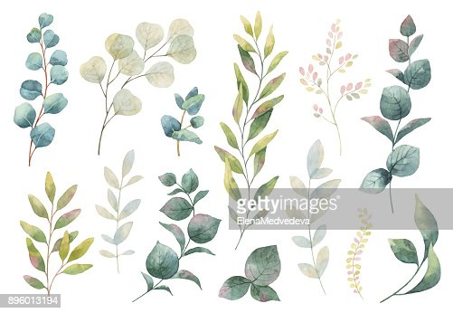 Hand drawn vector watercolor set of herbs, wildflowers and spices. : Vector Art