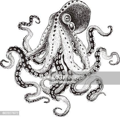 Hand-drawn Octopus, vector illustration. : Vector Art