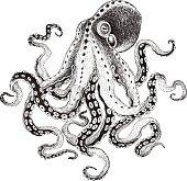 Hand-drawn Octopus, vector illustration.