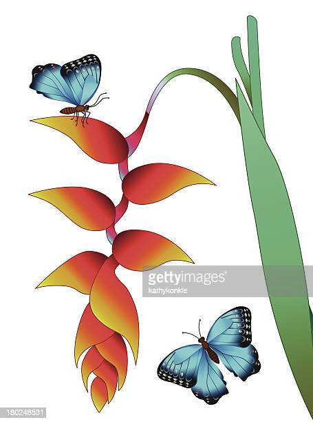 hanging heliconia und morpho butterfly