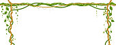 Hanging vine branches. Tropical jungle and plants on white background.