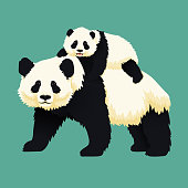 Happy smiling baby giant panda riding on the back of an adult panda. Chinese bear family. Mother or father and child. Rare, vulnerable species.