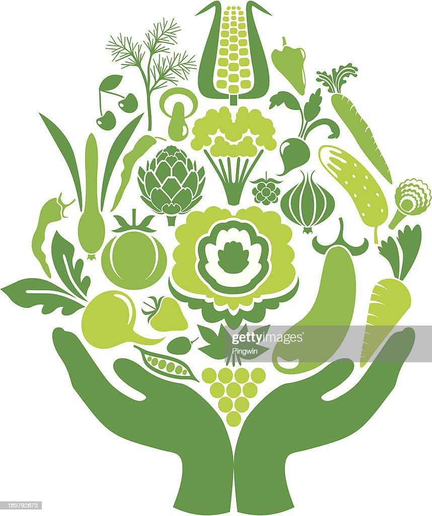 Harvest in hands, colorful version : Vector Art