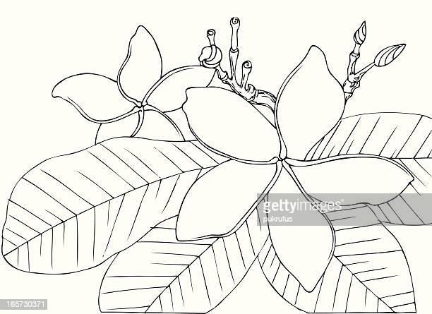 Hawaiian Vintage Blumen in schwarz und weiß