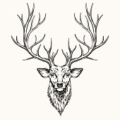 Head of deer, hand drawn illustration, EPS 8.