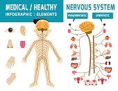 system nervous..sympathetic system,parasympathetic system.infographic element..health care concept,.vector.flat icons design..medical graphic illustration