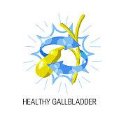 Healthy gallbladder vector concept. Cartoon medical illustration