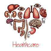 Heart health symbol composed of human organ sketch. Brain, lungs and liver, kidney, stomach and intestine, spine, tooth, eye and ear in a shape of heart for healthcare and medicine themes design