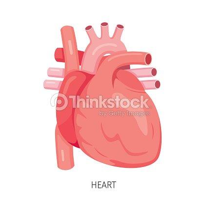 Corazón órgano Interno Humano Diagrama Arte vectorial | Thinkstock