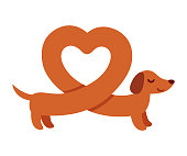 Cute cartoon dachshund with heart shaped body. Funny Weiner dog St. Valentines day greeting card vector illustration.