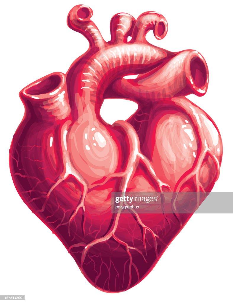 Heart : Vector Art