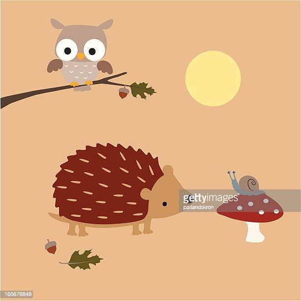Hedgehog Meets A Snail