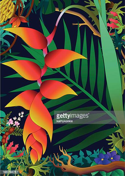 heliconia in den Dschungel