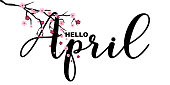 Hello April, calligraphy letters motivational quote, isolated on white background, vector illustration. Handwritten letters, Japanese sakura branch, little cute flowers falling.