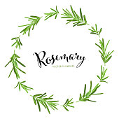 Herb and spice frame with branch of green rosemary leaves on white background template. Vector set of element for advertising, packaging design of condiment products.