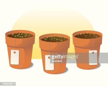 Jardin Dherbes Aromatiques Clipart Vectoriel Getty Images