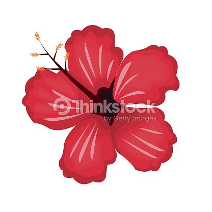 Hibiscus flower exotic nature