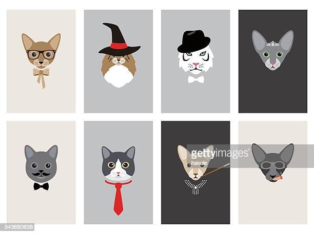 hipster, portrait of cat, gentlemen cat